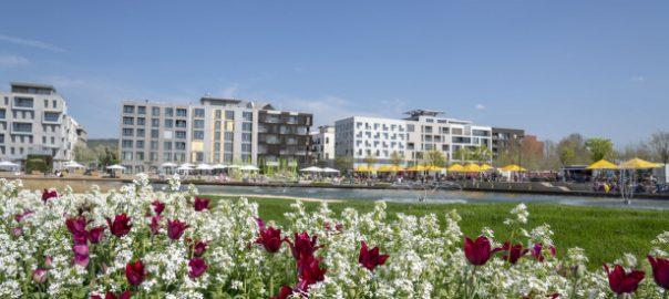 BuGa 2019: Heilbronner Image blüht auf